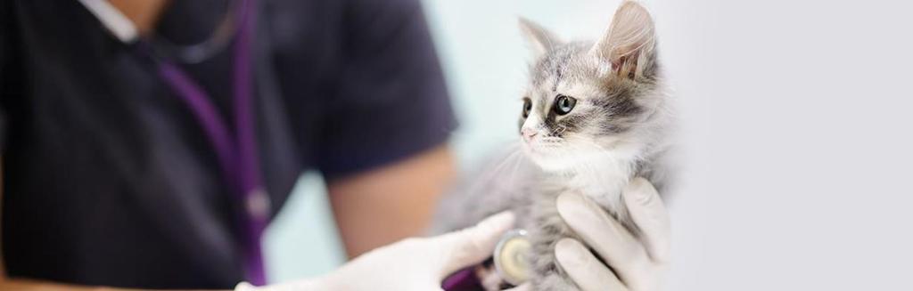 Podstawowa profilaktyka zdrowotna u kotów – Arka